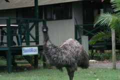 Emu in front of a lodge